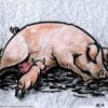 Pig cartoon. Cartoon of pig lying down with suckling piglet by Allan Cavanagh