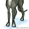 Funny greyhound cartoon clipart